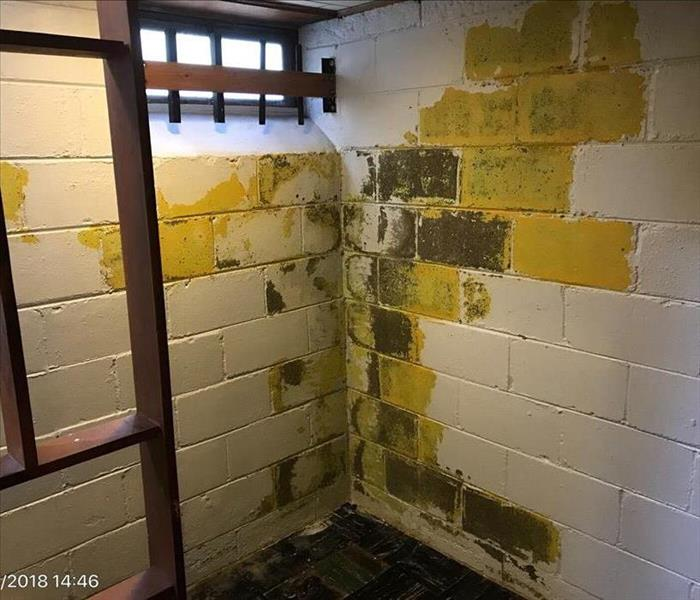 Mold Remediation 7 Signs You May Have Mold in Your Home