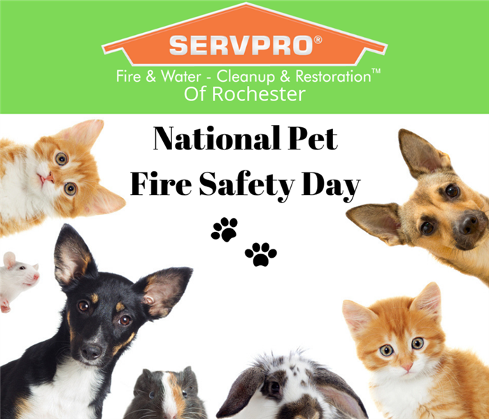 Community National Pet Fire Safety Day 2019